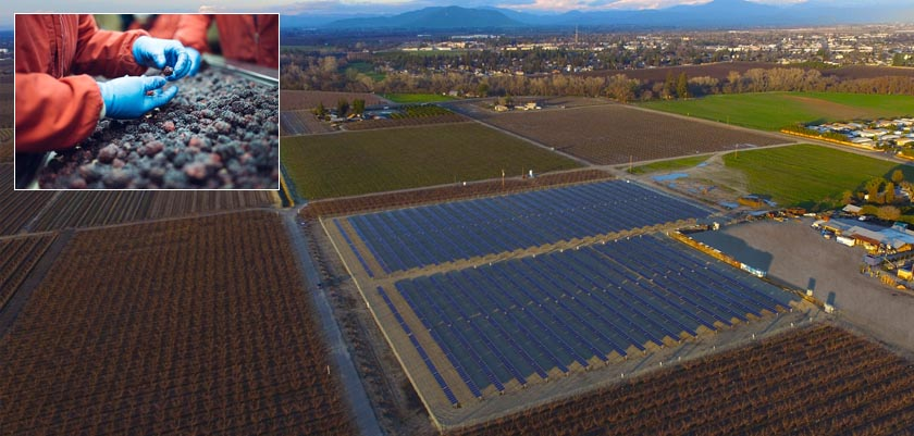 Three Ways Solar Can Reduce the Energy Density of Agricultural Crops